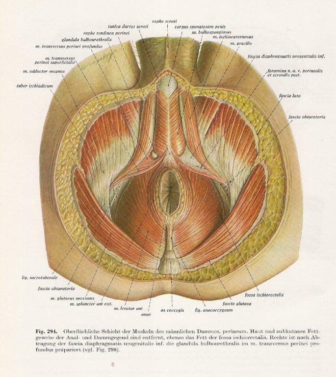 borstkas